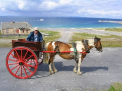 Aran Island pony and trap
